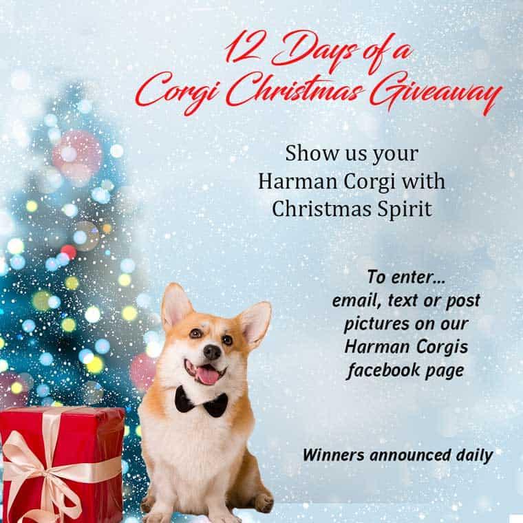 Harman Corgis 12 days of a Corgi Christmas